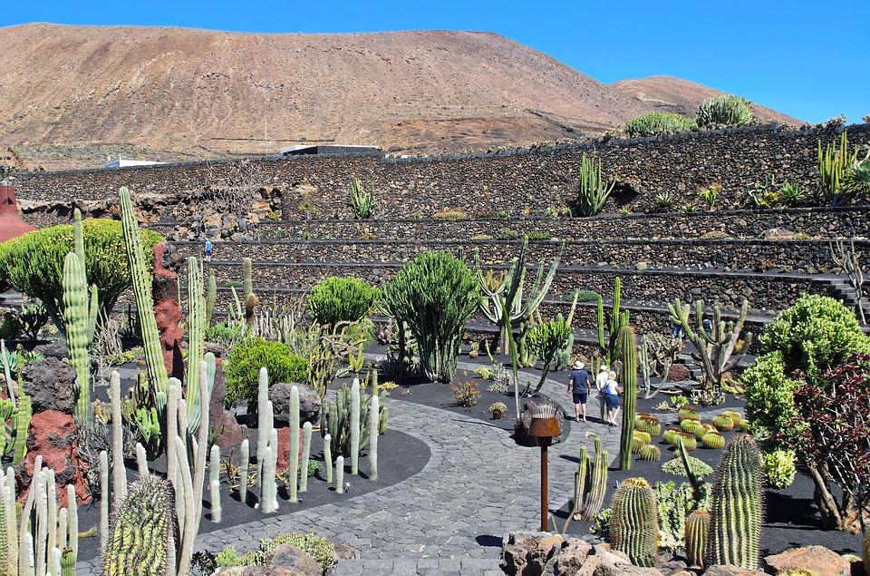 Jardin de los Cactus